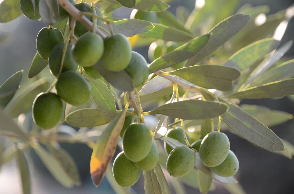 Agricultura: la Comisión aprueba el «Aceite de Jaén» como nueva indicación geográfica española