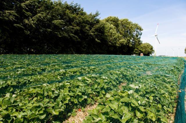 182,9 millones de euros para la promoción de los productos agroalimentarios europeos, con especial atención a la agricultura sostenible